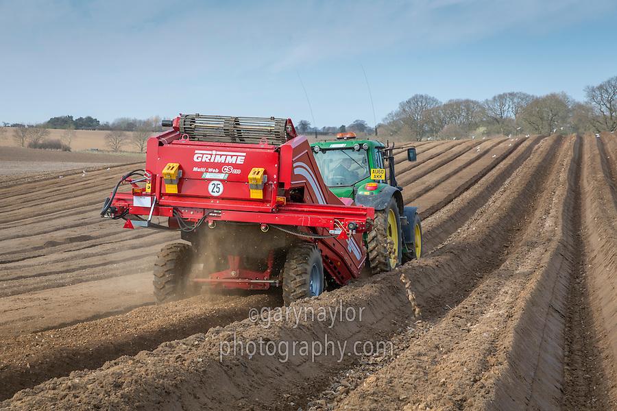 Destoning with Grimme CS150 Combi web destoners - Norfolk, March