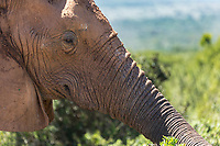 Addo National Elephant Park is located in the Eastern Cape in South Africa.