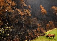 Fecha: 07-11-2017 Cervantes, Doiras, Lugo . -Ayudas incendios forestales-. La Xunta ha puesto una oficina en el colegio de Doiras, en el municipio lugués de Cervantes, el más afectado de la provincia de Lugo por los incendios forestales de octubre. En la imagen paisajes de la zona afectada. Foto:EFE/eliseo trigo