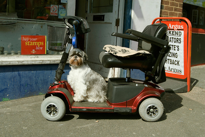 A dog waits on a mobility scooter while its owner is shopping.