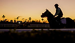 January 22, 2020: A horse jogs on the man track as horses prepare for the Pegasus World Cup Invitational at Gulfstream Park Race Track in Hallandale Beach, Florida. Scott Serio/Eclipse Sportswire/CSM