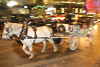 A horse and carriage ride from Sealth Horse Carriage operated by Steve Bachman in seattle, Wash. (photo © Karen Ducey Photography)