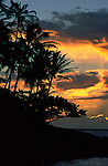 Sunset on Kauai, silhouette palm trees, orange coloured clouds, Hawaii Islands, coast.USA....