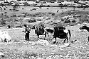 Irak 1971.Nomades en route pour les hauts plateaux.Iraq 1971.Nomads on their way to the highlands