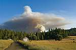 Greeley Hill, California - July 28, 2008- Wildfires Threaten Yosemite National Park .Jenkins Ranch off Bull Creek Road are oblivious to a smoke plume from Branch Three of the Telegraph Fire as it blows up late Monday afternoon.  This part of the fire is on the north side of the Merced River and is heading toward the community of Greeley Hill. .Photo by Al GOLUB/Golub Photography.