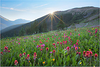 One of these days I'll write a blog about my favorite locations to photograph Colorado wildflowers amid sweeping landscapes. In the top 5 on that list would be a not-as-well known area (except to locals) close to Berthoud Pass called Butler Gulch (actually closer to Empire than Winter Park). In the summer of 2014 the colors were the best I'd seen - and I'd visited the iconic Colorado locations like American Basin near Lake City and Yankee Boy Basin near Ouray earlier in the summer. The landscapes near Crested Butte were excellent this summer, but I hit that location a bit early.<br /> <br /> This Colorado wildflower image comes from Butler Gulch early one morning as the sun peeked over the ridge. The paintbrush were plentiful and the it seemed the morning was nearly perfect.<br /> <br /> Butler Gulch is popular for snow-shoers in the winter and folks with dogs in the summer, and is located on Highway 40 past the town of Berthoud Falls. The turnoff is at the first switchback just before you start the climb up Berthoud Pass. Turn left before the first switchback. You'll follow the road past the Big Bend picnic area a few miles before eventually turning onto an easy dirt road (you'll have to turn right because you'll encounter a gate - if you go straight that is restricted access - I think it is a mine). After another mile or so the road will split with the right branch heading uphill. Go left and you will reach a parking area in ~100 yards. Park, walk past by the gate on an old jeep road, and start hiking as the road makes a sweeping left curve before starting a gradual ascent. The trail to the best meadows for wildflowers is just over two miles and about 1000 vertical feet . There are parts of this hike that become a grunt but nothing too bad. The most treacherous portions of this hike are a few water crossings that require short traverses over trees laid across the water. Even these parts are not too difficult, but crossing them in the dark can be a bit sketchy (I u