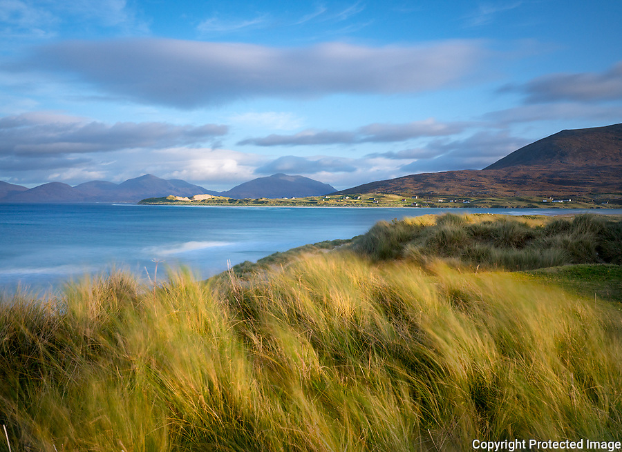 Isle of Lewis and Harris, Scotland: Beach grasses in the wind of Luskentyre beach on South Harris Island