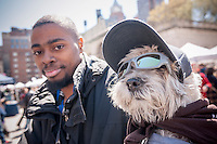 Shaggy, 10 year old Malitpoo with Ryan Legrier in Union Square in New York at Adoptapalooza on Sunday, April 10, 2016. Hosted by the Alliance for NYCs Animals the event featured hundreds of homeless animals just waiting to be adopted by loving families. The event celebrated the 150th anniversary of the ASPCA.  (© Richard B. Levine)