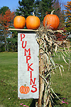 Pumpkins with sign