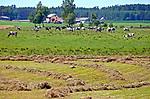 Kaszuby, 2011-07-05. Krajobraz kaszubski - okolice Leśna
