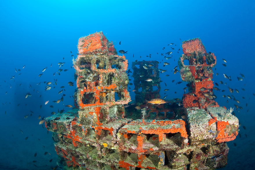 One of the deeper artificial reef submerged, lying on the sand surrounded with damselfish (Chromis chromis) and Comber (Serranus cabrilla) in the middle, Larvotto Marine Reserve, Monaco, Mediterranean Sea<br /> Mission: Larvotto marine Reserve