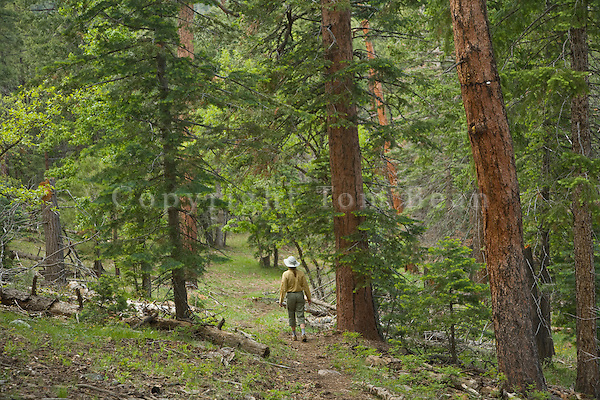 Hiker follows the Arizona National Scenic Trail through mixed conifer woodland on eastside of Mormon Mountain, Coconino National Forest south of Flagstaff, Arizona, AGPix_1890