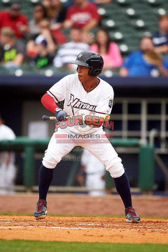 NW Arkansas shortstop Raul Mondesi (2) squares to bunt during a game against the San Antonio Missions on May 30, 2015 at Arvest Ballpark in Springdale, Arkansas.  San Antonio defeated NW Arkansas 5-1.  (Mike Janes/Four Seam Images)