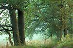 Europa, DEU, Deutschland, Nordrhein Westfalen, NRW, Eifel, Nationalpark Eifel, Landschaft, Waldrand, Baeume, Eichen, Eichenbaeume, Kategorien und Themen, Natur, Umwelt, Landschaft, Jahreszeiten, Stimmungen, Landschaftsfotografie, Landschaften, Landschaftsphoto, Landschaftsphotographie, Natur, Naturfoto, Naturfotos, Naturfotografie, Naturphoto, Naturphotographie<br /> <br /> [Fuer die Nutzung gelten die jeweils gueltigen Allgemeinen Liefer-und Geschaeftsbedingungen. Nutzung nur gegen Verwendungsmeldung und Nachweis. Download der AGB unter http://www.image-box.com oder werden auf Anfrage zugesendet. Freigabe ist vorher erforderlich. Jede Nutzung des Fotos ist honorarpflichtig gemaess derzeit gueltiger MFM Liste - Kontakt, Uwe Schmid-Fotografie, Duisburg, Tel. (+49).2065.677997, archiv@image-box.com, www.image-box.com]