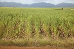 Sugar plantation near San Cristobal, Pinar Province, Cuba. MR