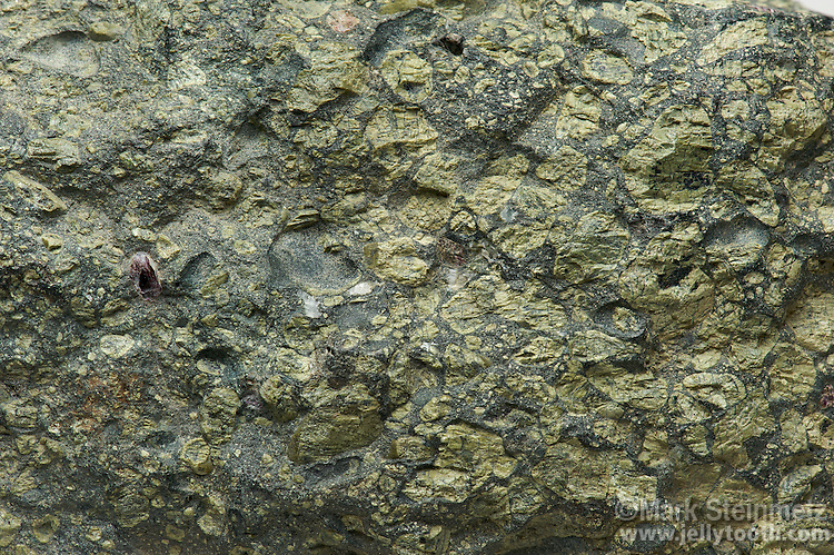 """Close-up of peridotite, a dense, coarse-grained igneous rock containing a large amount of of the mineral olivine. Peridotite is dominant in the Earth's upper mantle. This specimen has small inclusions of garnet. Finch """"blow"""". Orange Free State, Replublic of South Africa."""