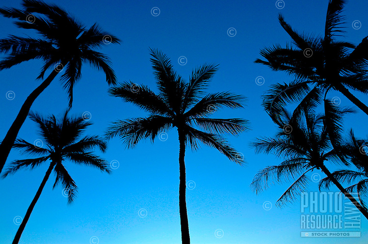 Silhouetted palm leaves with twilit sky