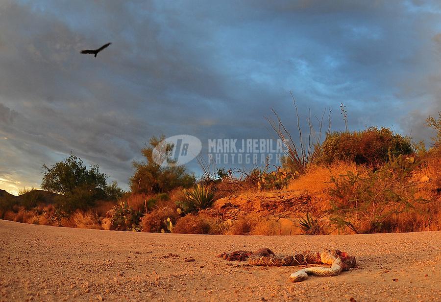 desert weather storm chaser chasing clouds sky Arizona mountain mountains sunset dead rattlesnake dirt road bird hawk turkey buzzard crow cactus