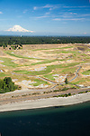 aerial view of the Lone Fir standing watch behind the 15th green of Chambers Bay Golf Course with Mount Rainier rising in the distance, site of the 2015 US Open Championship; University Place, WA near Tacoma