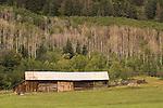Log and wood barn beneath aspen grove, Lechner Bar-44 Ranches, southwest Colorado.