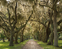 The entrance to Cumberland Island National Seashore is a picturesque oak alley, untouched since the turn of the century.