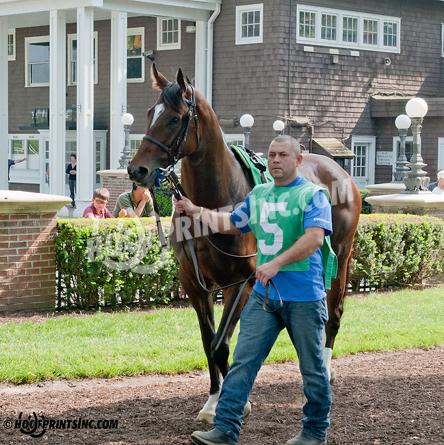 Makayla's Angel in the paddock at Delaware Park on 5/22/13