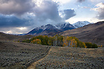 Idaho, Central, Custer County, Mackay.  Early season snow on the white Knob Mountains with a grove of aspen trees in early October.