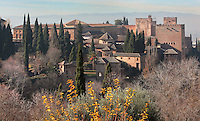 The Alhambra Palace seen from the Generalife, Granada, Andalusia, Southern Spain. The Alhambra was begun in the 11th century as a castle, and in the 13th and 14th centuries served as the royal palace of the Nasrid sultans. The huge complex contains the Alcazaba, Nasrid palaces, gardens and Generalife. Picture by Manuel Cohen