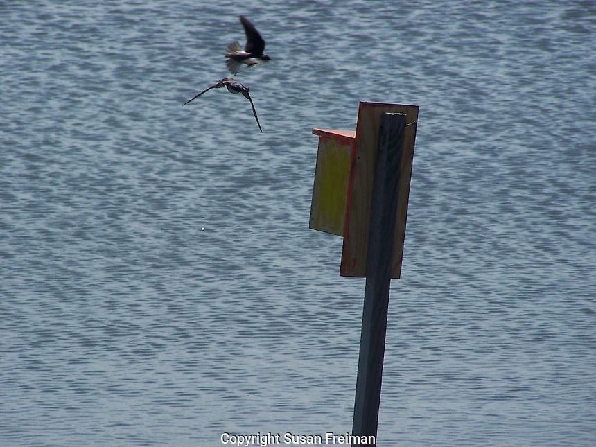 Water birds and Marsh nesting boxes