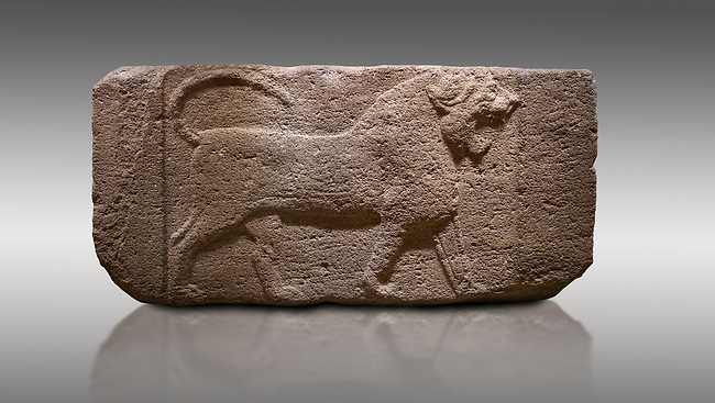 Pictures & images of Phygian relief sculpted orthostat stone panel. Andesite, Etimesgut, Ankara. Phrygian. 1200-700 BC. Anatolian Civilisations Museum, Ankara, Turkey.<br /> <br /> Figure of a roaring lion. The cross mark on the chest draws attention. The muscles in his legs are schematic. There are frame edges in front and behind the lion. <br /> <br /> Against a gray background.
