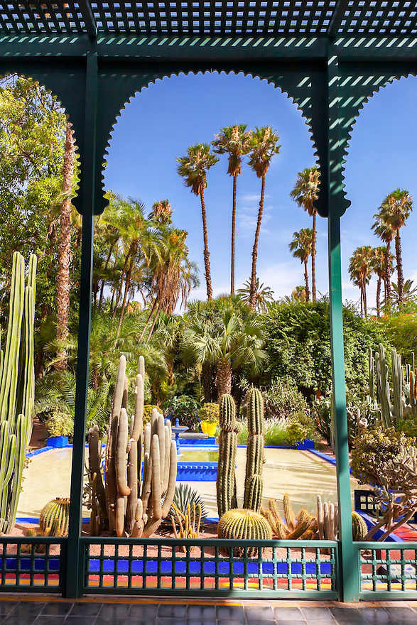 Cactuses in the Majorelle Garden in Marrakech.