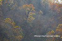 65045-01116 Trees in fall, Ozark National Scenic Riverway near Akers Ferry, MO