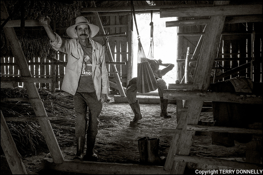 Vinales, Cuba:<br /> Tobacco farmer with cigar in his drying barn near Vinales