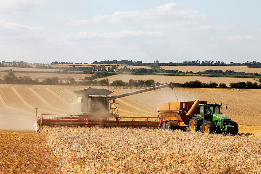Photo: Richard Lane/Richard Lane Photography. A Claas combine harvester cutting winter barley unloading into a chaser bin near Hindon, Wiltshire. 22/07/2014.