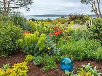 Indianola, WA: Summer perennial garden overlooking Puget Sound featuring euphorbia, poppies and sedum