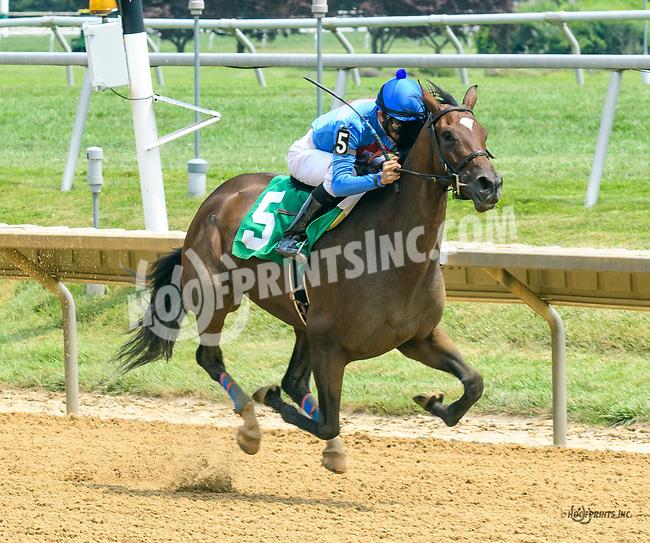 Blushing Bird winning at Delaware Park on 7/22/17