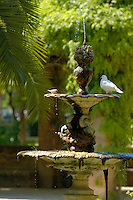 Birds drinking from a water fountain in Maria Luisa Park, Seville, Andalusia, Spain.