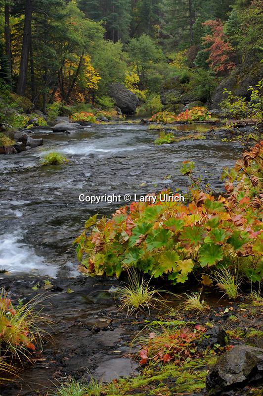 Indian rhubarb lines Deer Creek<br /> Highway 32<br /> Lassen National Forest<br /> Sierra Nevada, California