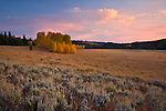 Grand Teton National Park, WY <br /> Sunset colored sky over aspen grove in Buffalo Meadows, Snake River valley