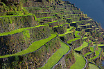 The stunning Ifugao stone-walled rice terraces in the village of Batad in North Luzon, Philippines.