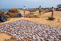 Fishermen drying out fishing nets in Negombo fish market (Lellama fish market), Negombo, West Coast of Sri Lanka, Asia. This is a photo of fishermen drying fishing nets in Negombo fish market (Lellama fish market), Negombo, West Coast of Sri Lanka, Asia.