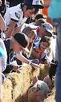 The crowd watches pigs head into the chutes for the pig races Saturday afternoon at the Corley Ranch Harvest Festival in Gardnerville, Nev. .Photo by Cathleen Allison