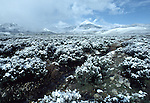 may snow at Great Basin National Park