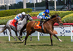 February 29, 2020: #7 Getmotherarose with jockey Junior Alvarado on board, wins the Honey Fox Stakes G3 on February 29th, 2020 at Gulfstream Park in Hallandale Beach, Florida. LizLamont/Eclipse Sportswire/CSM