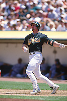 OAKLAND, CA - Mark McGwire of the Oakland Athletics in action during a game against the Chicago White Sox at the Oakland Coliseum in Oakland, California on May 17, 1997. Photo by Brad Mangin