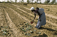 Woman farmer watering cabbage