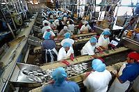 Sardine processing plant, Mexico