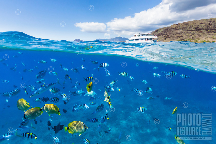 Tropical fish swimming off of Kahe Point on West O'ahu, with tourist boat in the background.