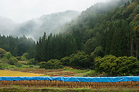 Rice harvest on a misty autumn day in the mountains near Nobushina, Nagano, Japan.