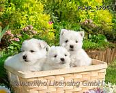 Marek, ANIMALS, REALISTISCHE TIERE, ANIMALES REALISTICOS, dogs, photos+++++,PLMP3205,#a#, EVERYDAY